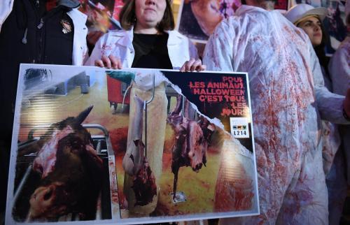 À Reims, L214 appelle les candidats aux municipales à s'engager pour les animaux - L'Union