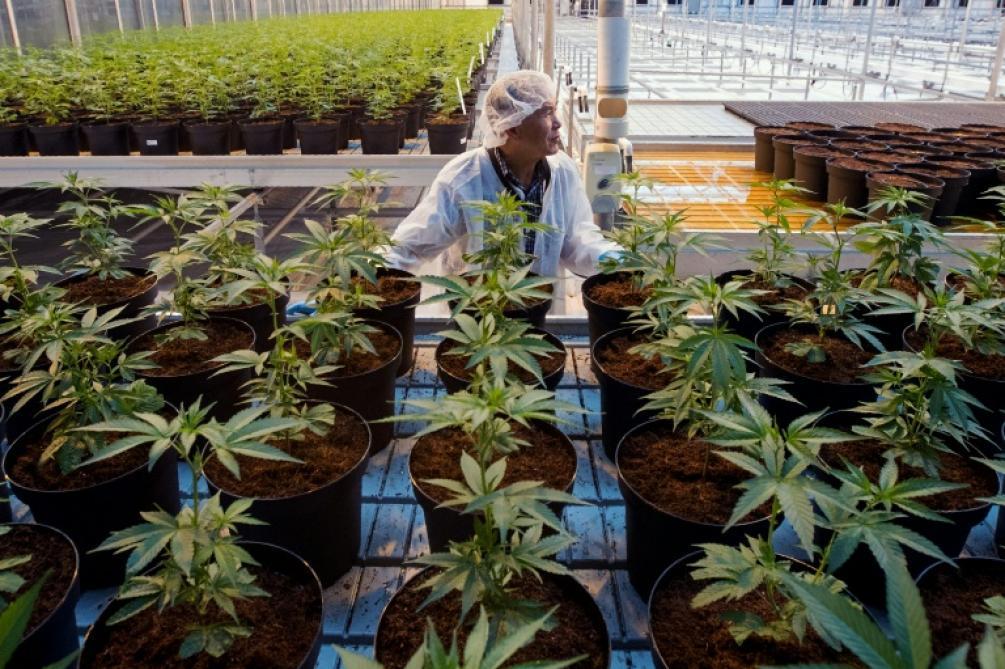 Rencontres en ligne pour les fumeurs de cannabis