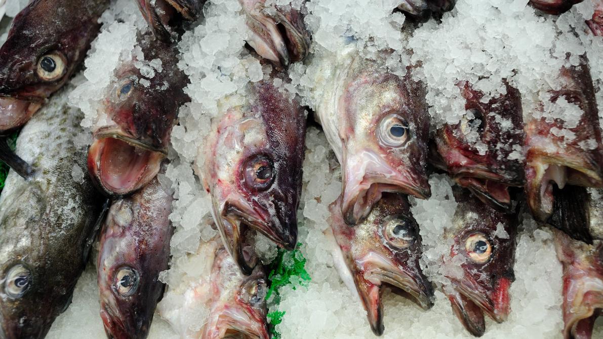 captures de poissons datant est un âgé de 21 ans datant de 16 ans