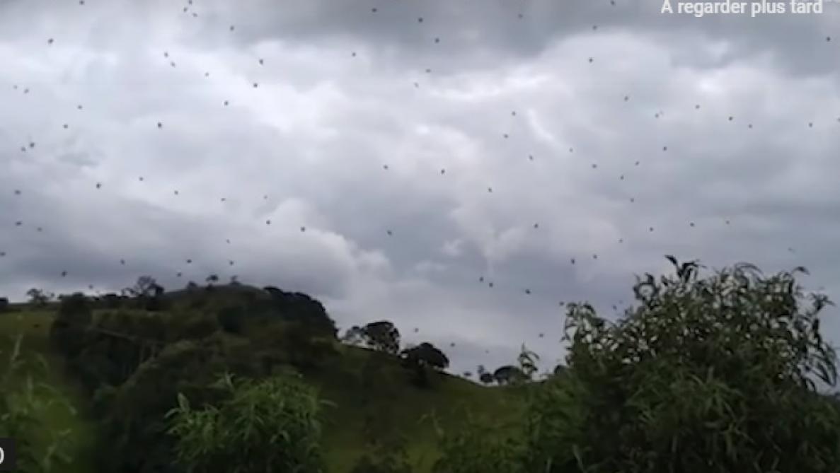 Vidéo-Une nuée d'araignées flottante dans les airs…un spectacle impressionnant