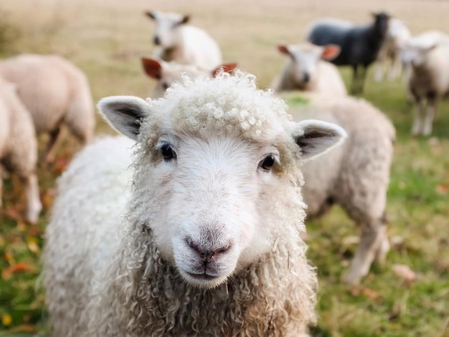Ces parents d'élèves sont tout sauf des moutons...