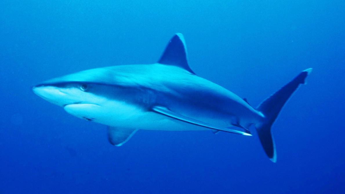 Un père se bat avec un requin et sauve sa fille
