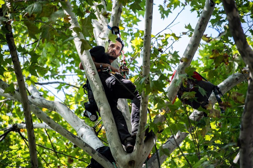 « Je ne suis pas prêt à redescendre de cet arbre », a-t-il expliqué samedi à l'AFP.
