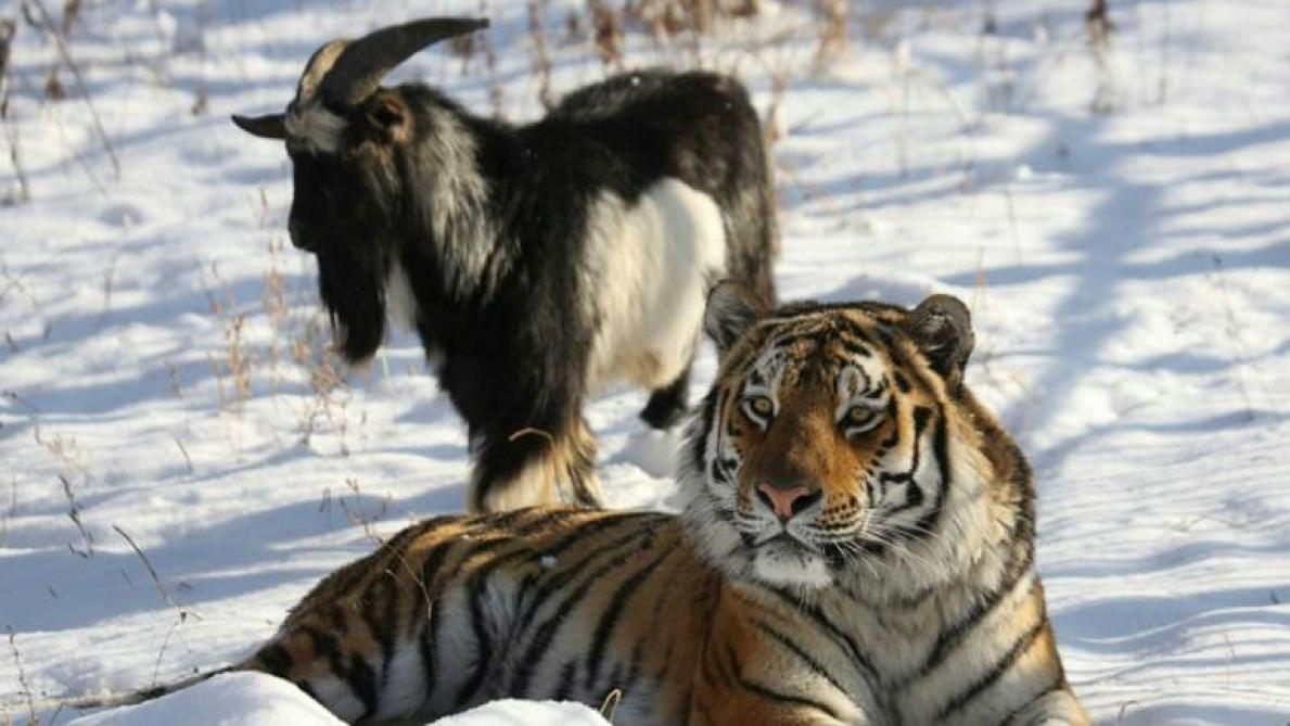 site de rencontre de tigre bonnes questions à poser quand votre datation