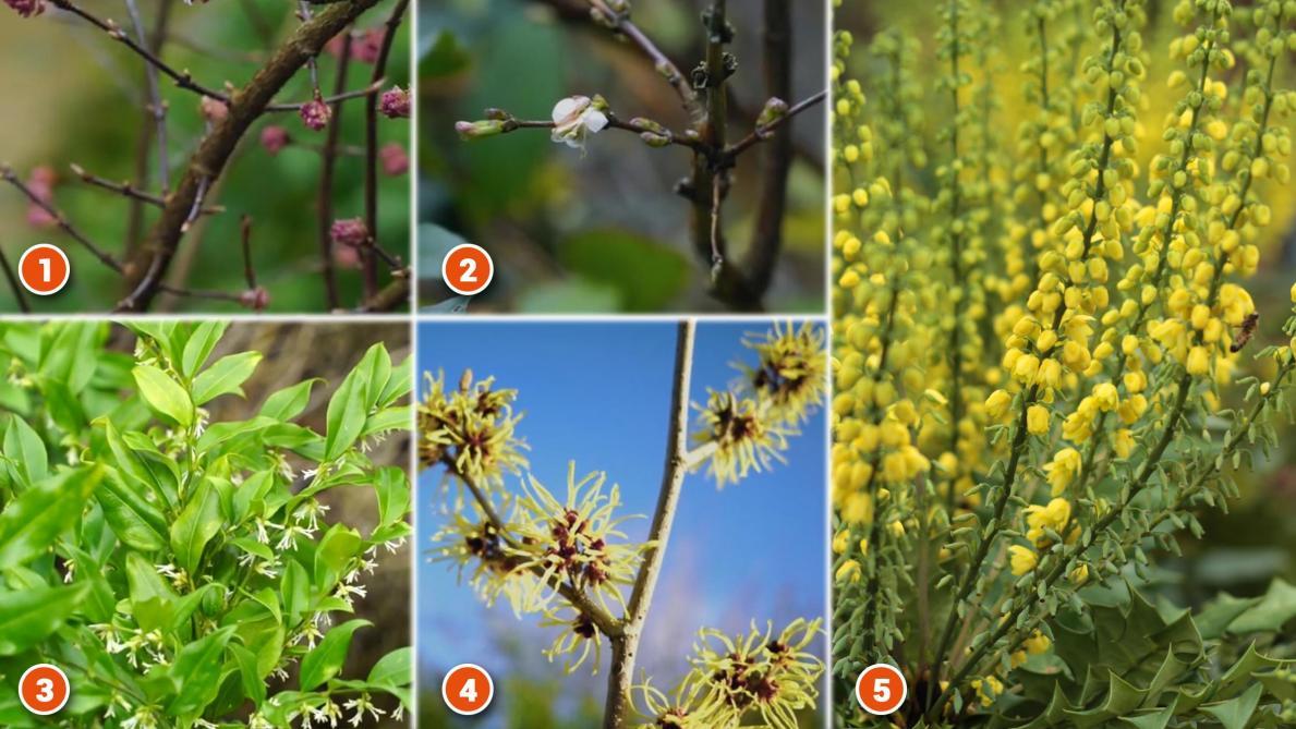 Arbuste Persistant Pour Pot des fleurs et des arbustes ouvrent déjà l'œil
