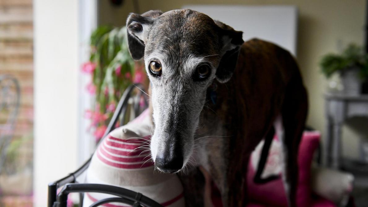 Canape Chien Maison Du Monde en danger dans leur pays, ces chiens trouvent une famille