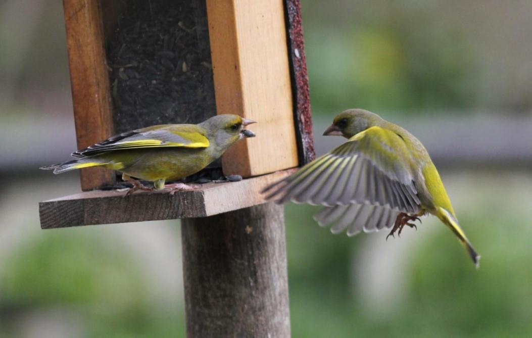 Ce Week End Les Marnais Sont Invites A Compter Les Oiseaux De Jardin
