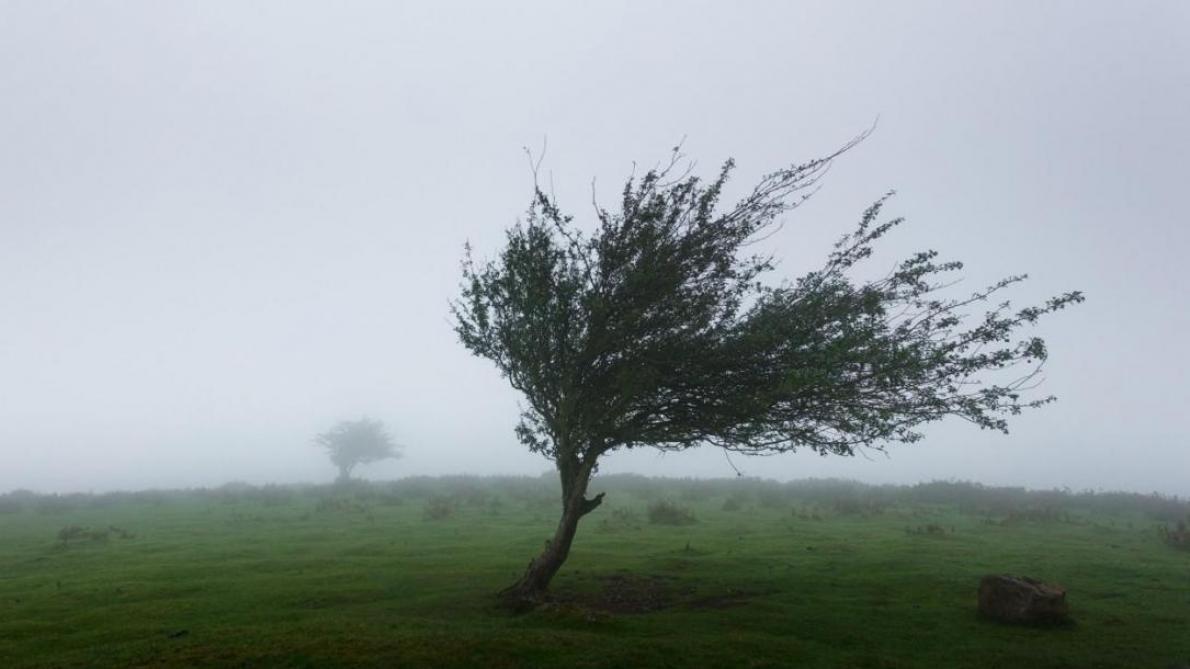 Lorraine : le tempête Ciara va souffler fort