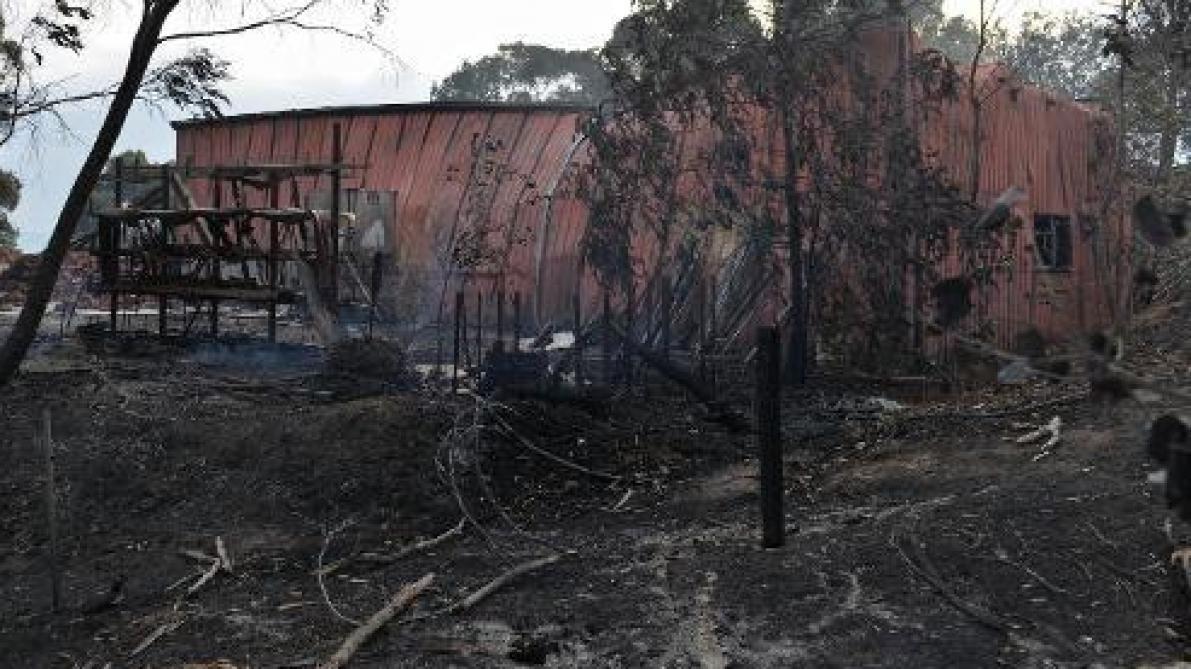 Les incendies ont détruit plus de 20% des forêts