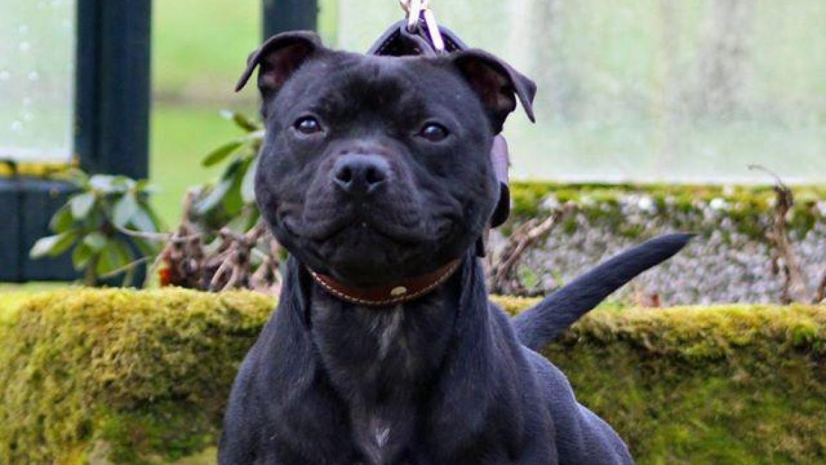Mort d'Élisa Pilarski : les tests ADN sur les chiens connus d'ici l'été