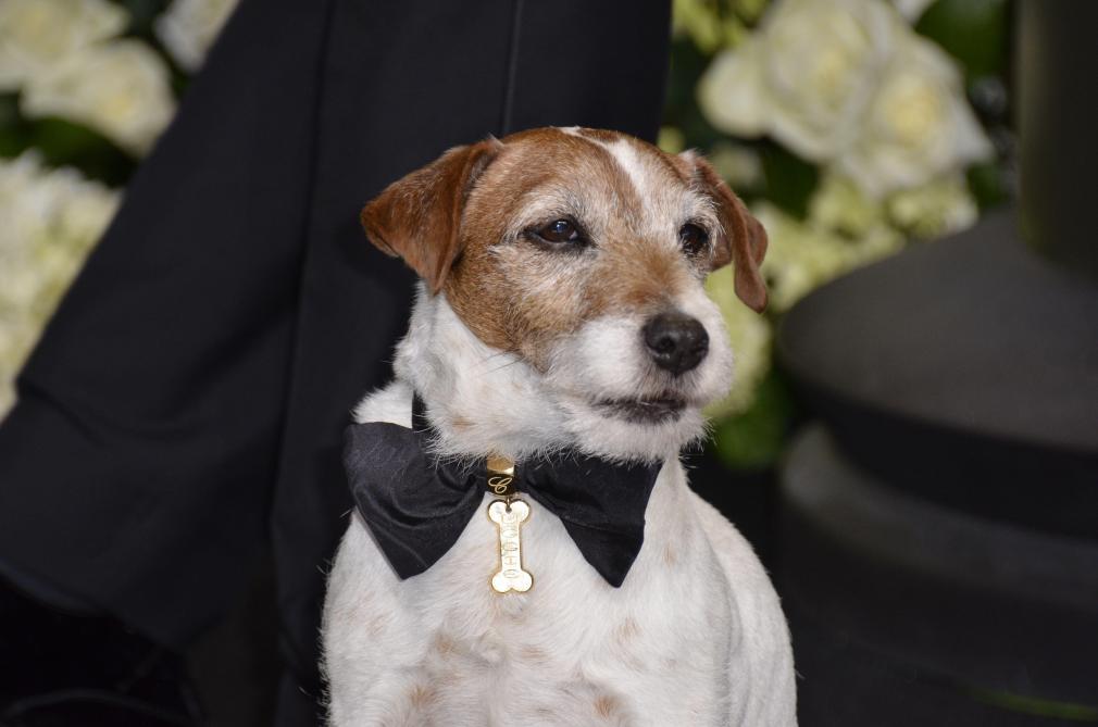 Uggie de The Artist sacré meilleur interprète canin à titre posthume