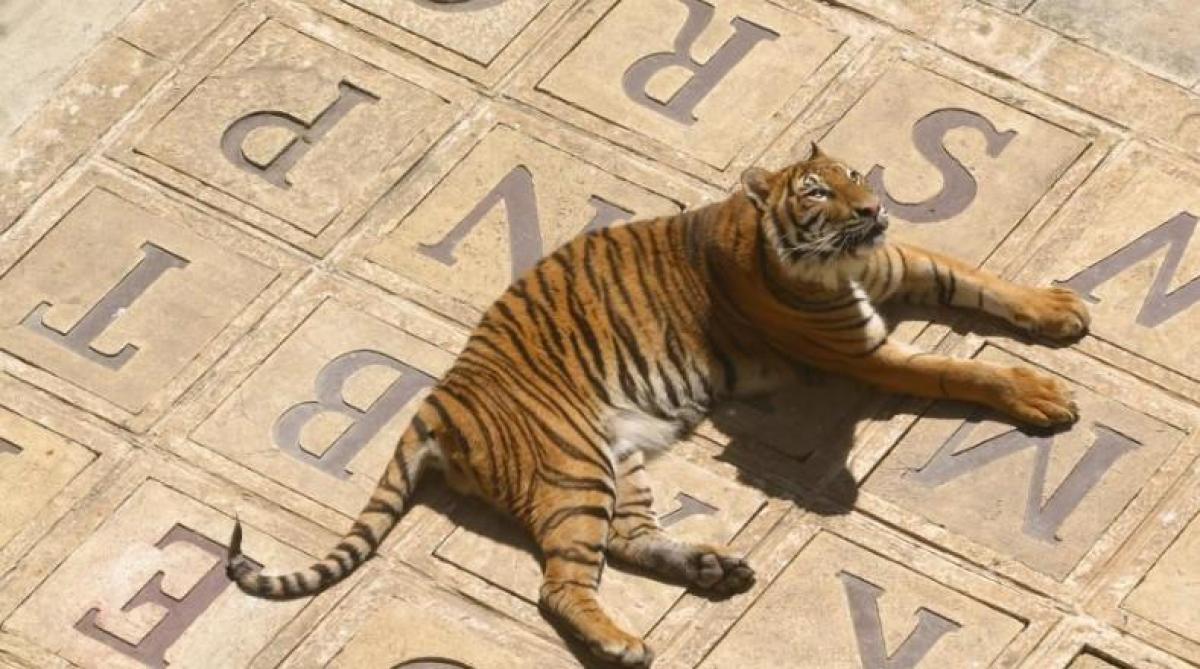 Fort Boyard: Quand les tigres partiront à la retraite ils ne seront plus remplacés