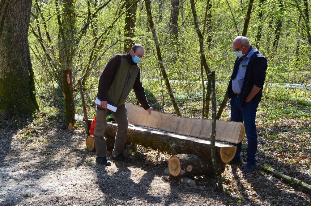 Un chêne abattu sur place a été mis à disposition par le syndicat forestier de Renwez pour fabriquer des bancs.