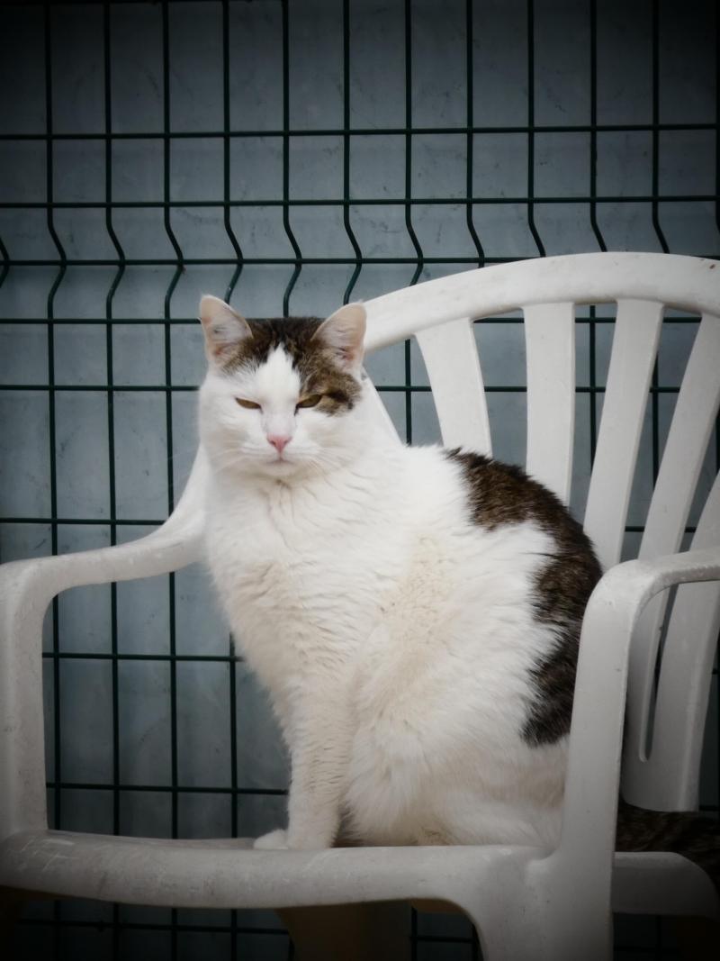 Jeunes serré adolescent chatte photos